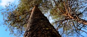 Skogen som ravara_huvud